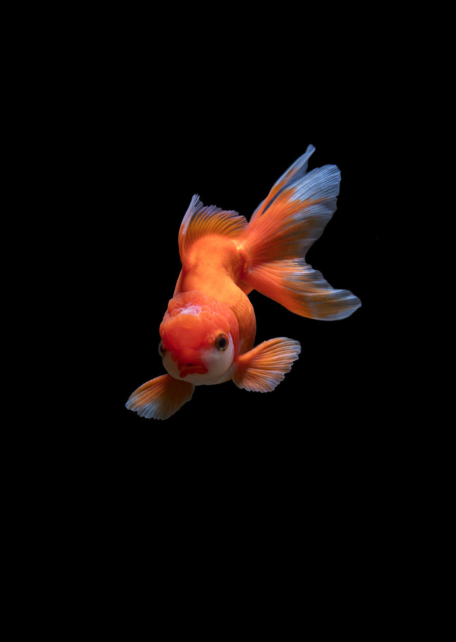 photoshop合成视频教程进入奇幻世界,女孩与鱼4
